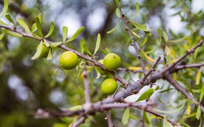 Agadir Argan Oil: los beneficios del aceite de argán para tu cabello